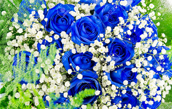 Blue Roses Meaning