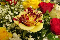 Red and Yellow Roses Meaning