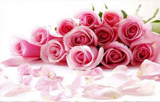 Pink and Red Roses Meaning