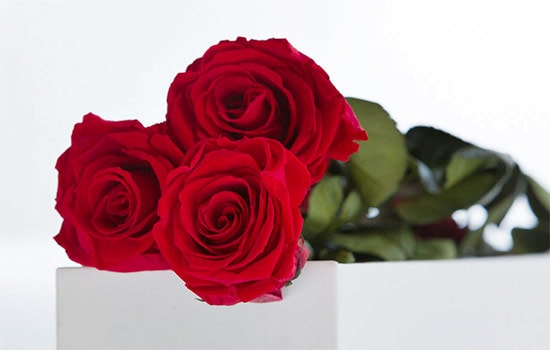 Red Roses Meaning