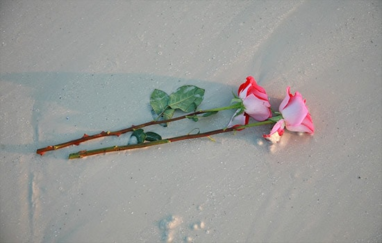 What is Two Rose Meaning