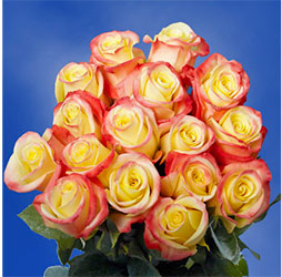 Yellow Rose With Red Tip