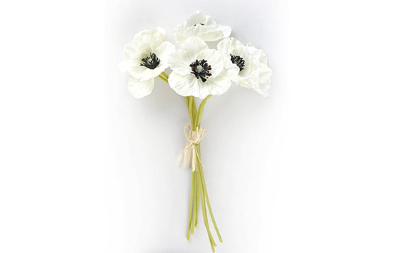 White Poppy, Flower That Mean Peace