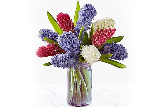 Hyacinth roses