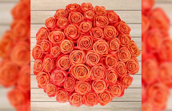 Orange roses meanings