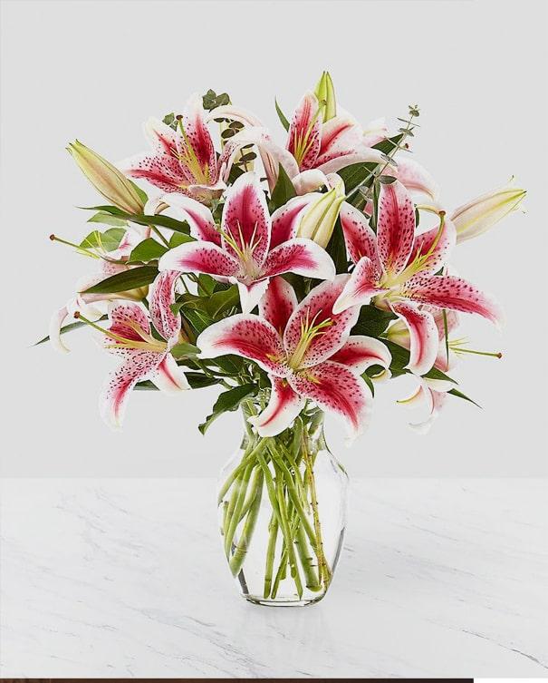 Stargazer Lily flower