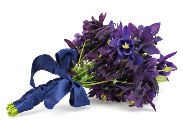 Columbine Flower Symbolize and Meaning